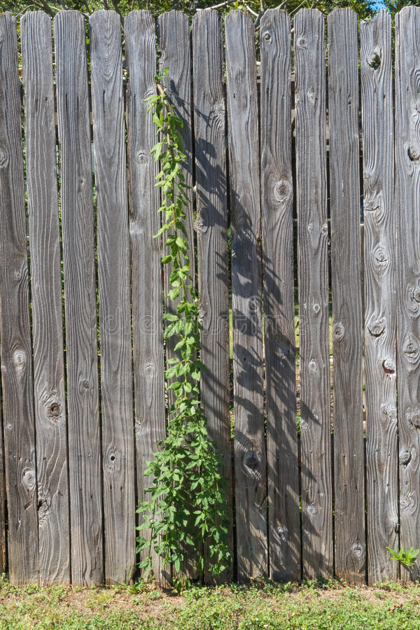 Videira e sombra da cerca imagem de stock