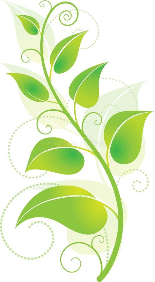 Videira verde ilustração royalty free