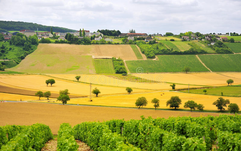 Videiras e agricultura, Sancerre, France imagens de stock royalty free