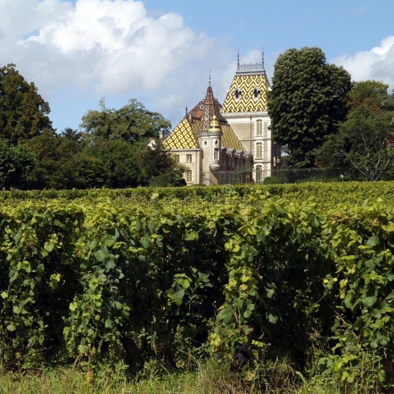Videiras em Aloxe Corton na região França do vinho de Cote de Beaune imagem de stock royalty free