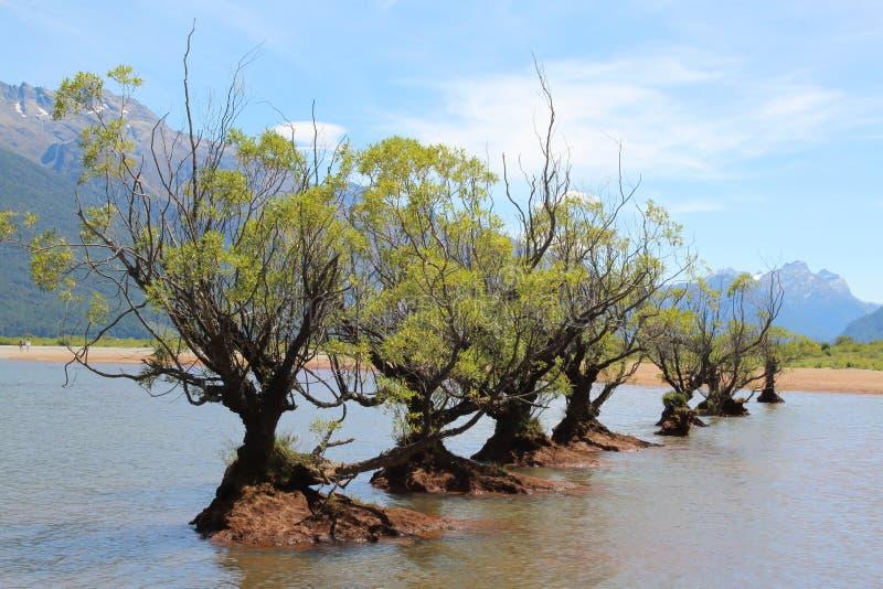 Viden i rad i vattnet av en sjö royaltyfri foto