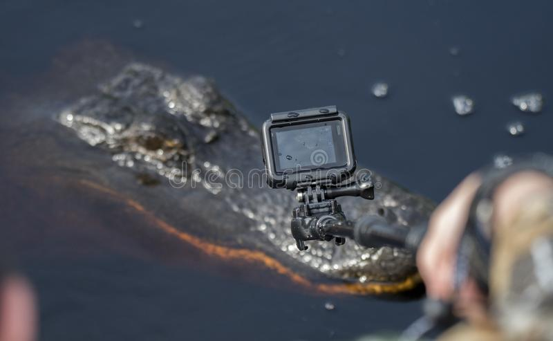 Close up filming of Alligator with mini action camera royalty free stock photo