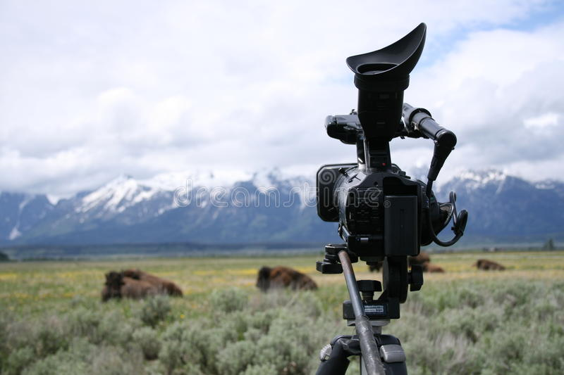 Download Video Camera On Tripod With Tetons And Buffalo Stock Image - Image: 10258137
