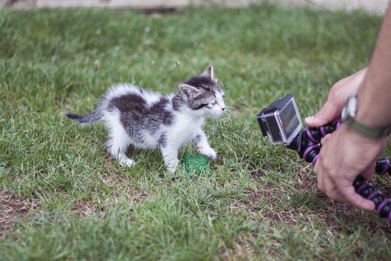 Videocamera кота стоковые изображения