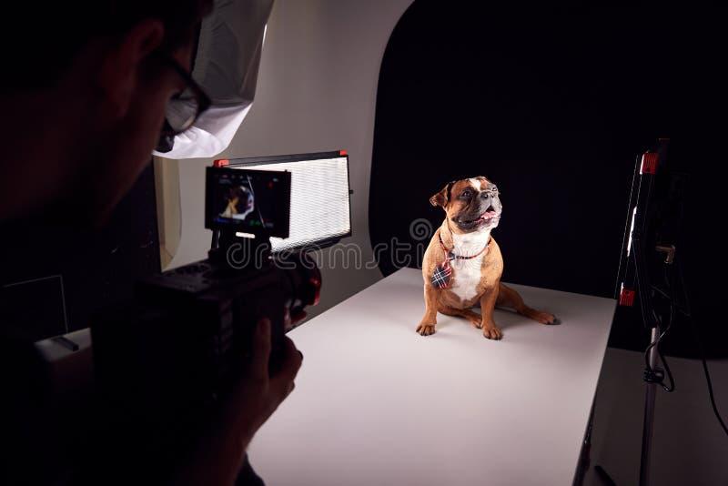 Videograaf filmbulldog-puppy Wearing-teis tegen zwarte achtergrond stock afbeeldingen