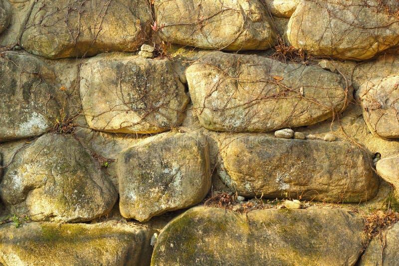 Vides en un fondo de piedra fotografía de archivo libre de regalías