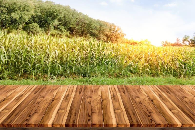 Videz la plate-forme d'espace de conseil en bois avec la ferme de maïs photographie stock