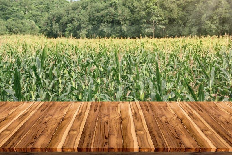 Videz la plate-forme d'espace de conseil en bois avec la ferme de maïs image stock