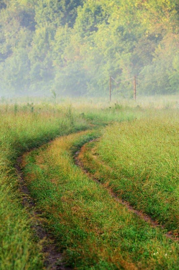 Videz la route rurale incurvée dans l'herbe verte avec la brume de matin photographie stock libre de droits