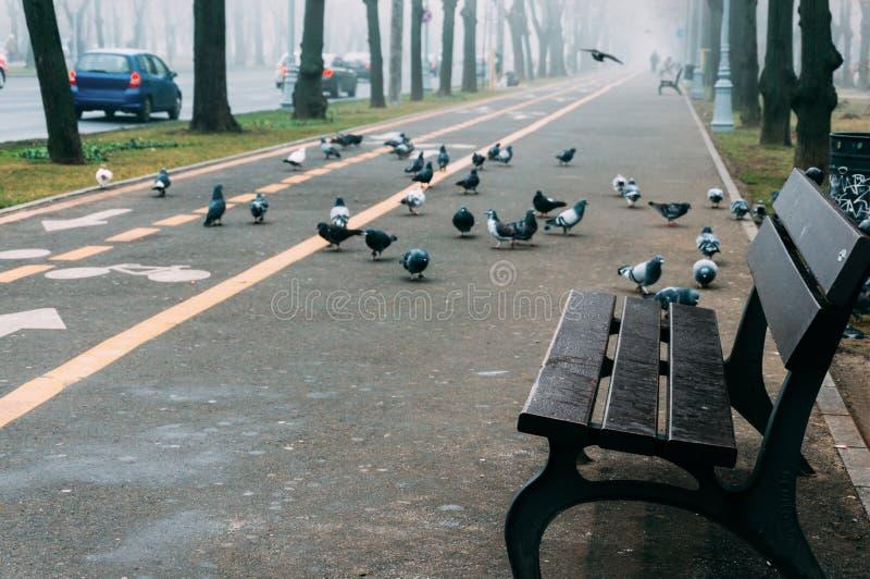 Videz le banc sur un trottoir photos libres de droits