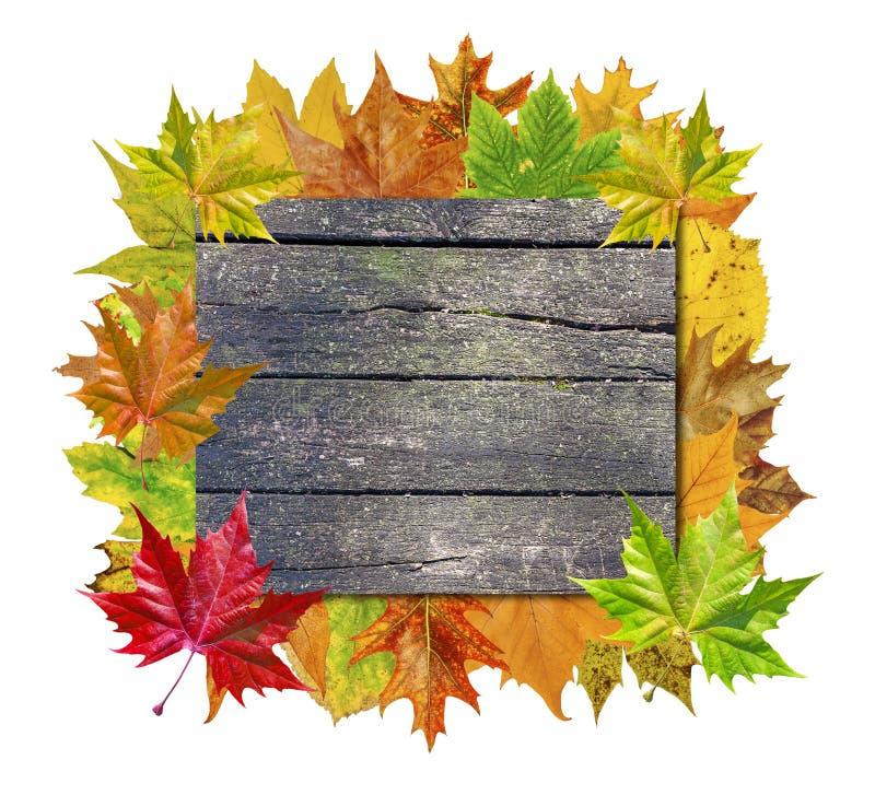 Videz le conseil en bois avec la feuille colorée de sort d'isolement sur le blanc photos stock