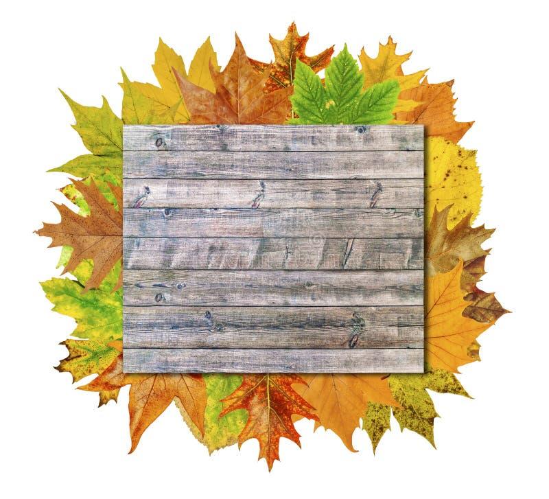 Videz le conseil en bois avec la feuille colorée de sort d'isolement sur le blanc image libre de droits