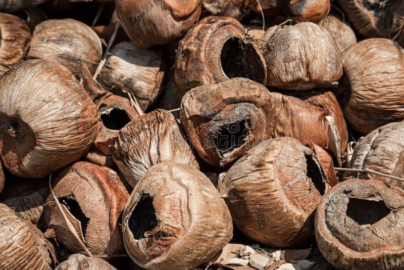 Videz les vieilles noix de coco s?ches Attente de la file d'attente pour br?ler Tons en gros plan et bruns Textures normales Noix photo stock