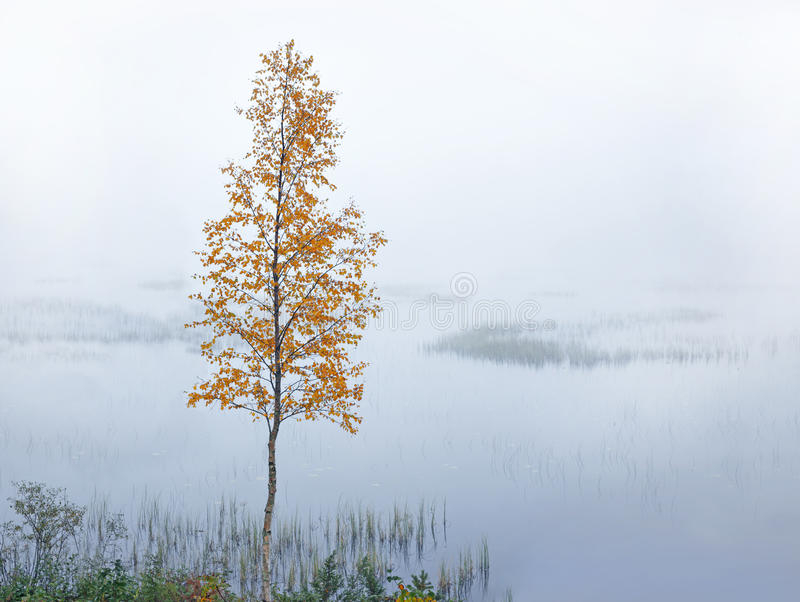 Vidoeiro pelo rio no outono fotos de stock royalty free