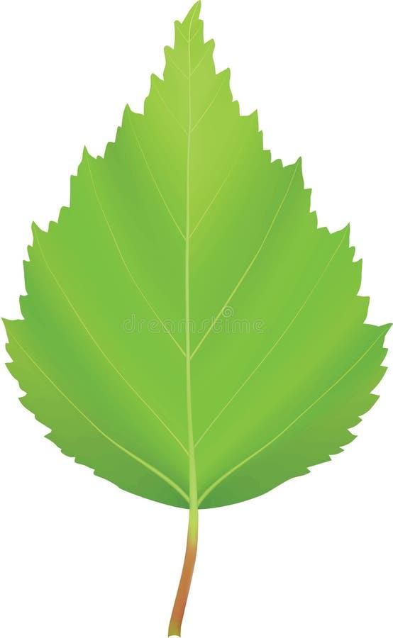Vidoeiro verde da folha do vetor fotografia de stock royalty free