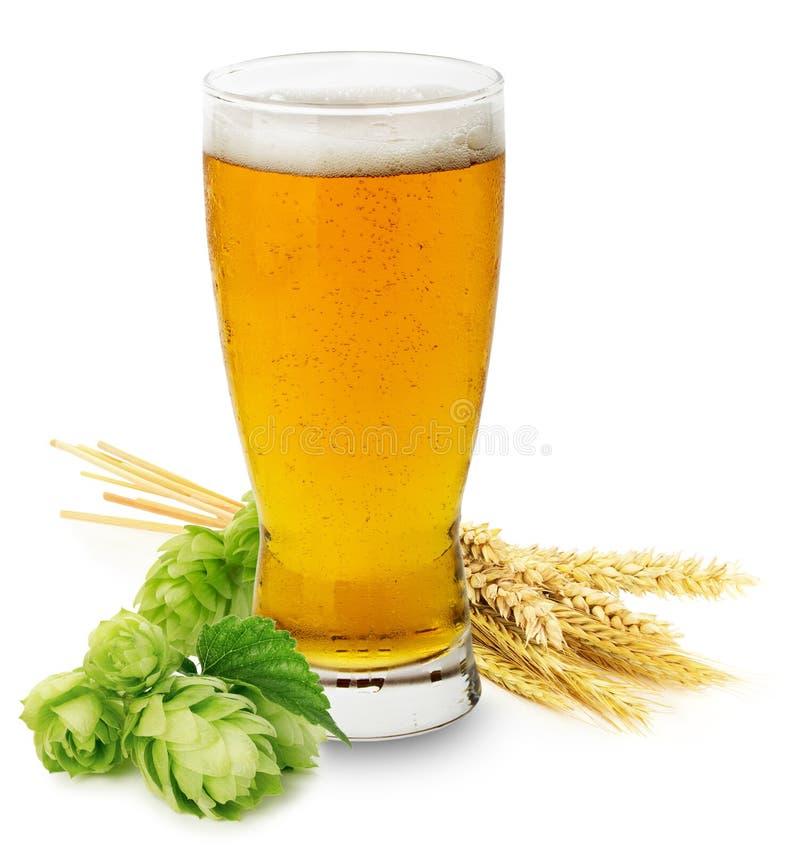 Vidrio de cerveza fresca con los saltos verdes y los oídos de la cebada aislados foto de archivo libre de regalías