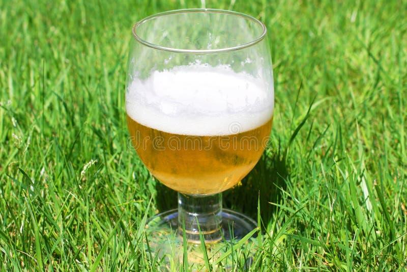 Vidrio de cerveza de lager sobre hierba foto de archivo