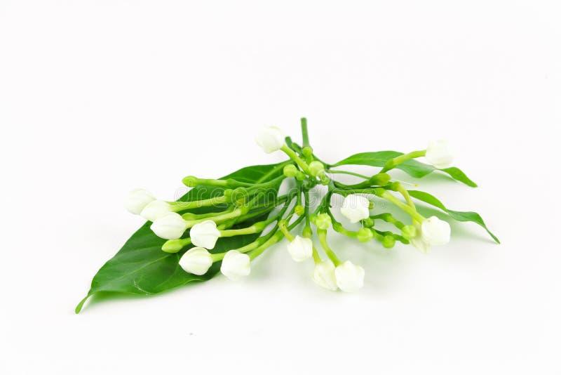 Vidrio de la flor de la gardenia imagen de archivo libre de regalías