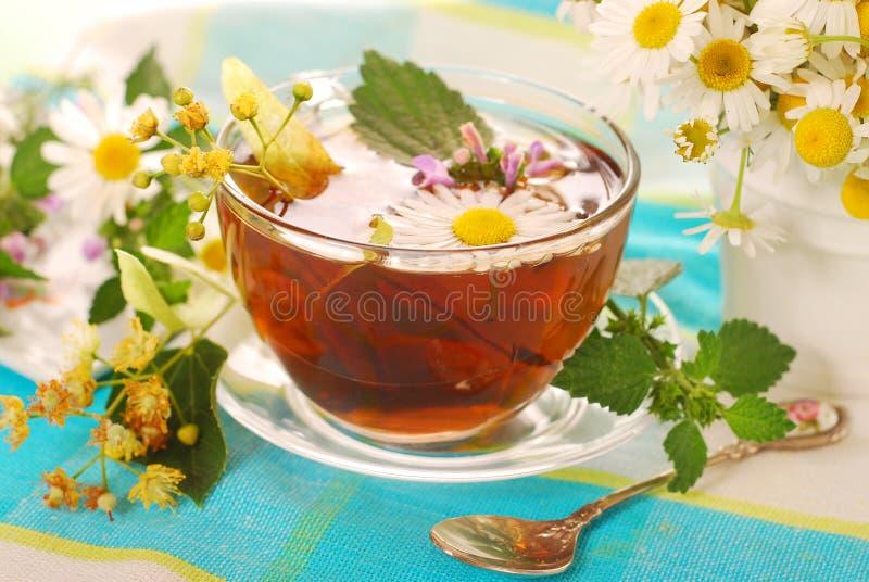 Vidrio de té herbario foto de archivo