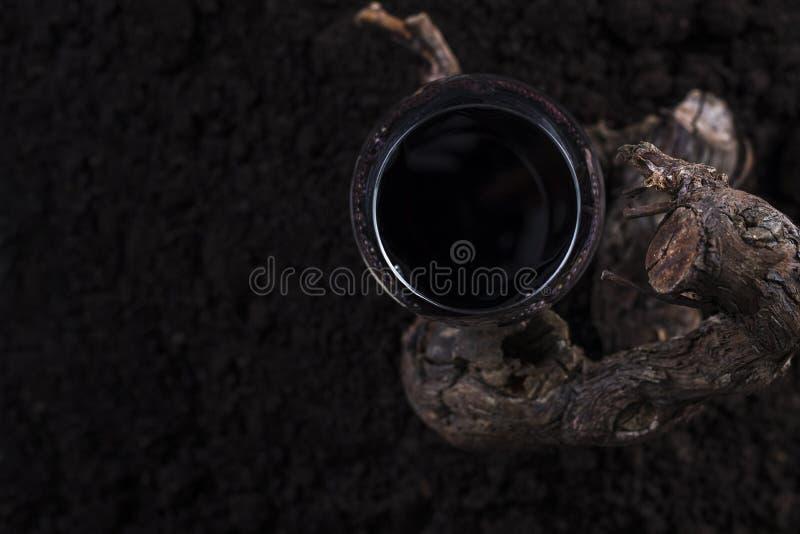 Vidrio de vino rojo con la vid en un fondo negro imagen de archivo libre de regalías