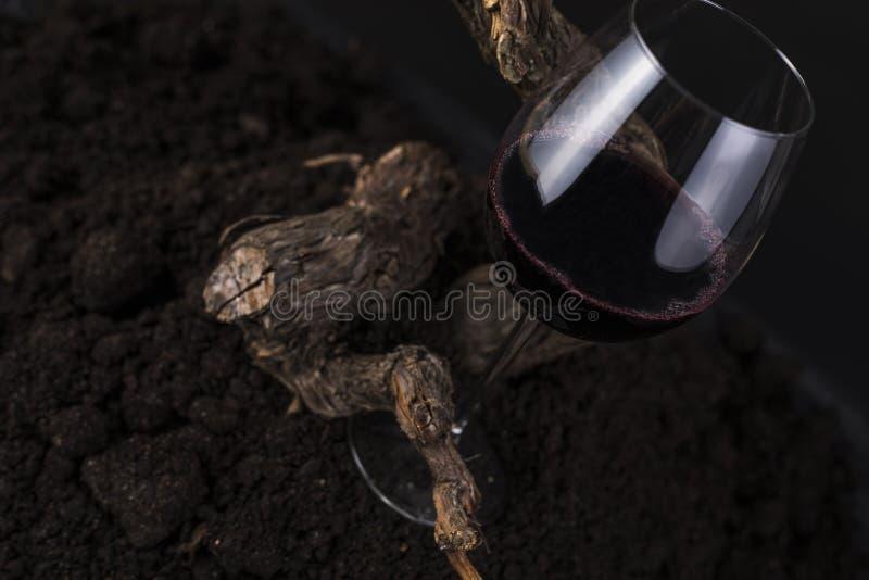Vidrio de vino rojo con la vid en un fondo negro imagenes de archivo