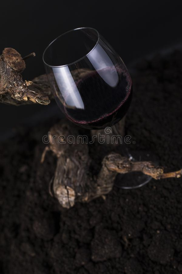 Vidrio de vino rojo con la vid en un fondo negro foto de archivo
