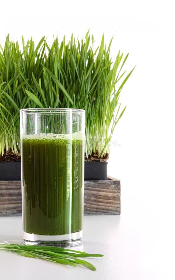 Vidrio de wheatgrass en blanco foto de archivo libre de regalías