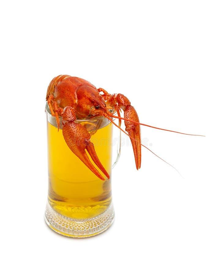 Vidrio lleno con la cerveza y los cangrejos hervidos en un fondo blanco fotos de archivo