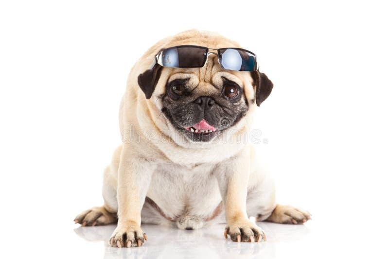 Vidrios del perro del barro amasado aislados en trabajo creativo del fondo blanco fotografía de archivo libre de regalías