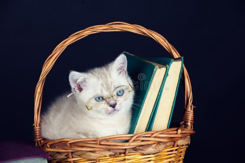Vidrios que llevan del gatito que se sientan en una cesta imagen de archivo libre de regalías