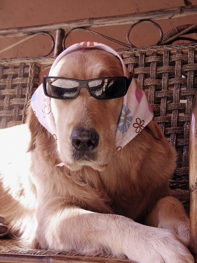 Vidrios que llevan del perro fotos de archivo libres de regalías