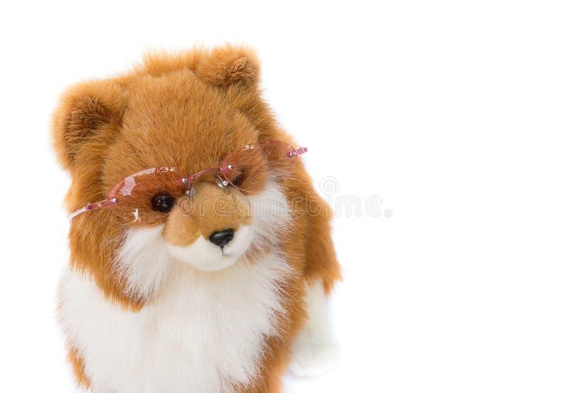 Vidrios que llevan del perro del carro en el fondo blanco imágenes de archivo libres de regalías