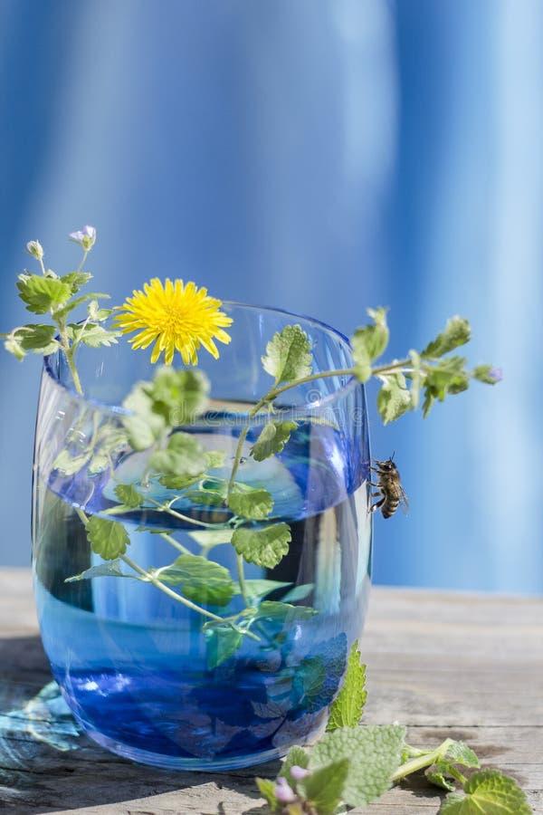 Vidro azul e um convidado imagens de stock royalty free