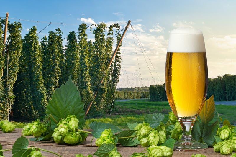 Vidro da cerveja com cones de lúpulo imagens de stock royalty free