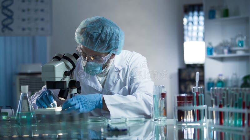 Vidro de exame do laboratório do técnico de laboratório médico com a amostra através do microscópio fotos de stock