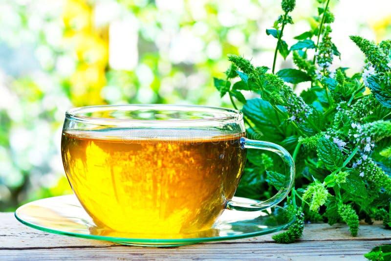 Vidro do chá da pastilha de hortelã com planta da pastilha de hortelã fotografia de stock