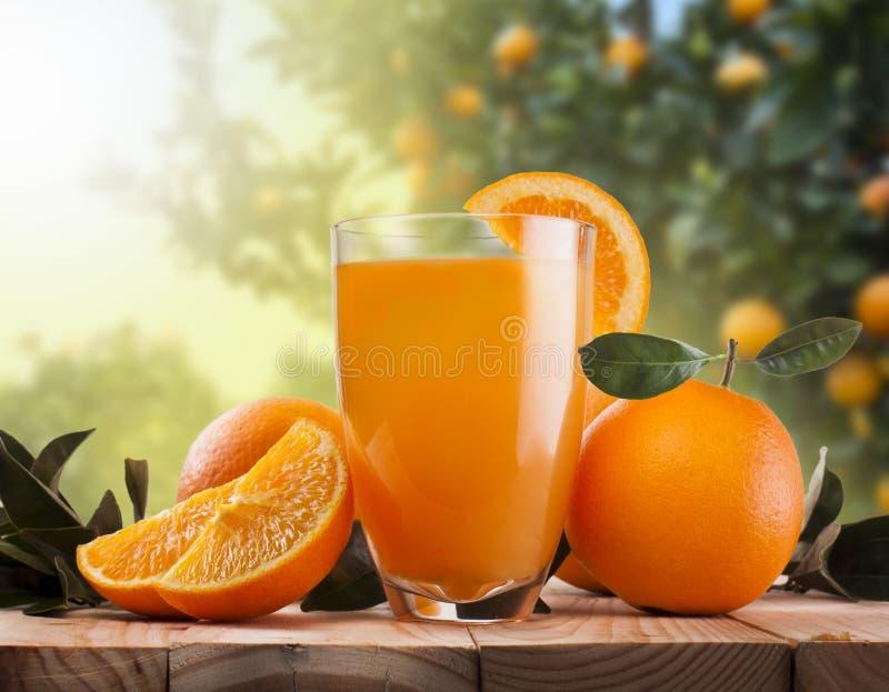 Vidro do suco de laranja e dos frutos fotografia de stock