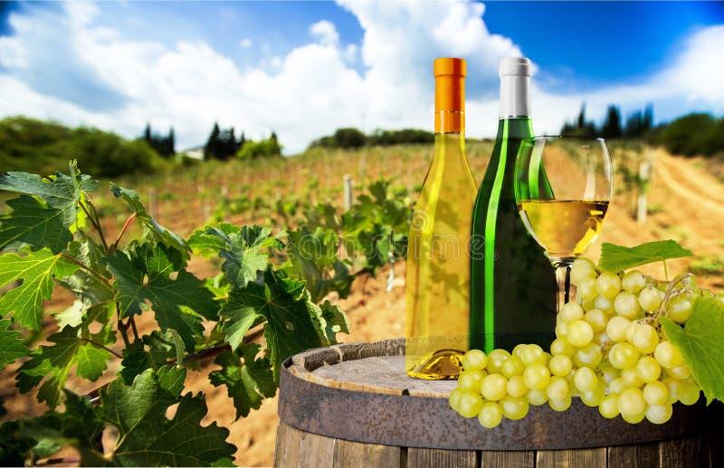 Vidro e garrafas do vinho branco na natureza fotos de stock royalty free