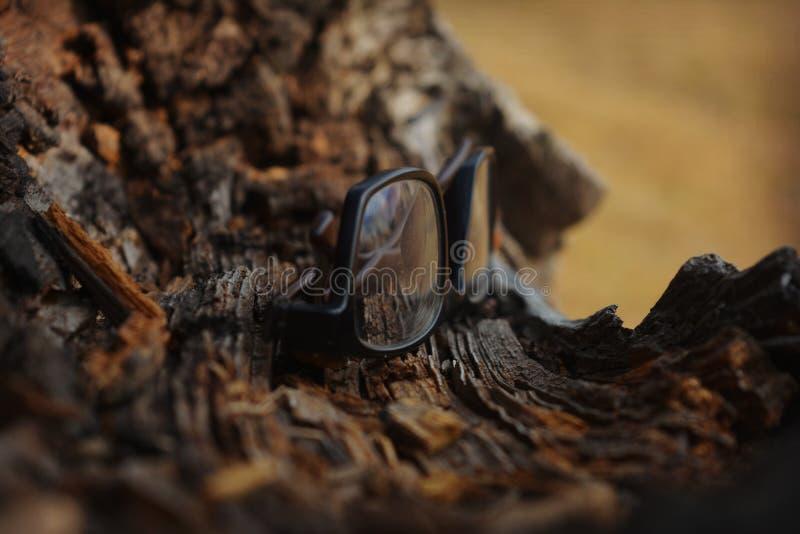 Vidros no log da madeira imagens de stock