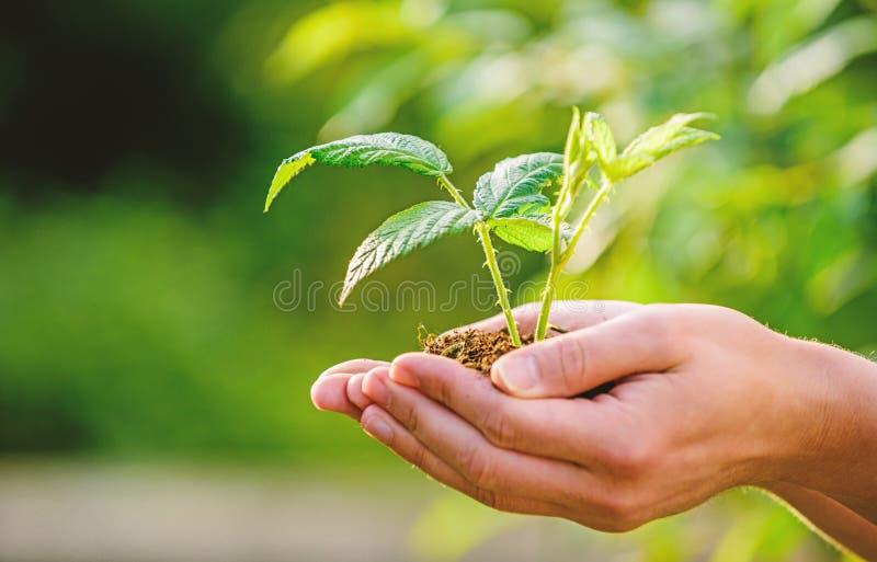 Vie d'Eco agriculture et culture d'agriculture Jardinage Nouvelle naissance de la vie usine en terre dans des mains usines de soi image libre de droits