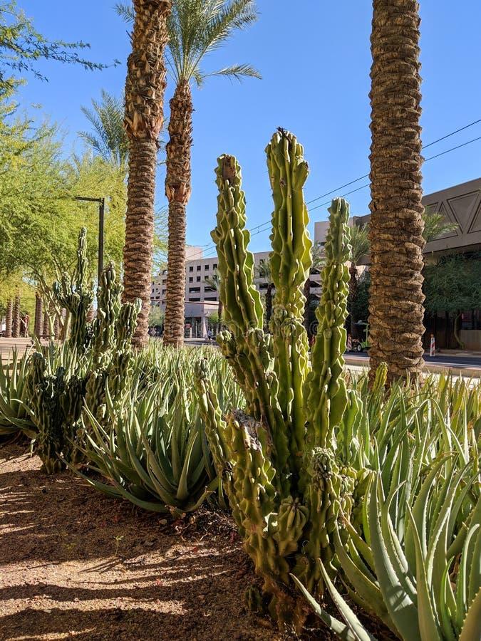 Vie del centro di Phoenix con le piante del deserto, Arizona fotografia stock libera da diritti