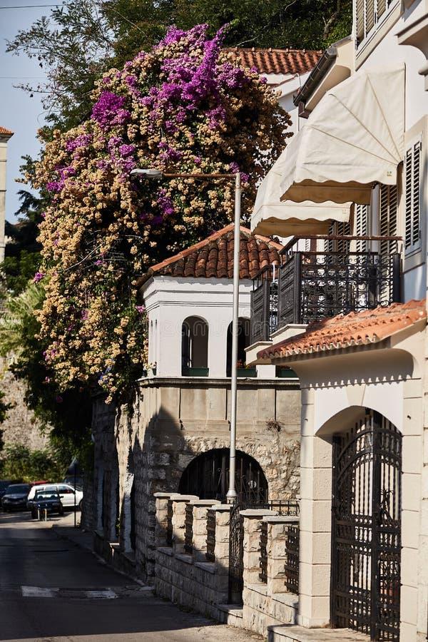 Vie di Castelnuovo Vicolo nel Montenegro immagini stock libere da diritti