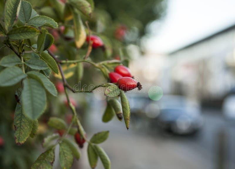 Vie di Londra - piante fotografie stock libere da diritti