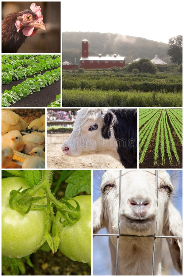 Vieh-Collage stockbilder