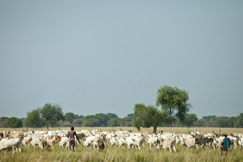 Vieh-Hirten, Lilir Sudan lizenzfreies stockfoto