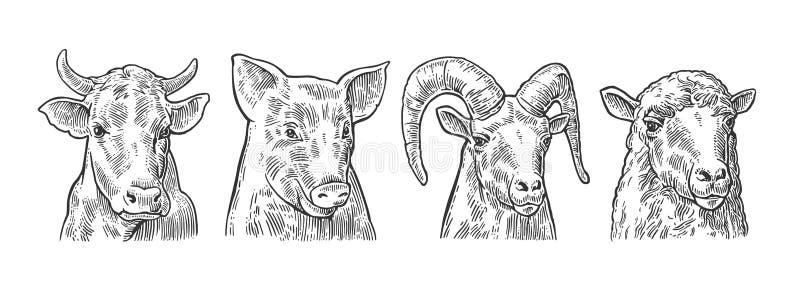 Vieh-Ikonensatz Schwein-, Kuh-, Schaf- und Ziegenköpfe vektor abbildung