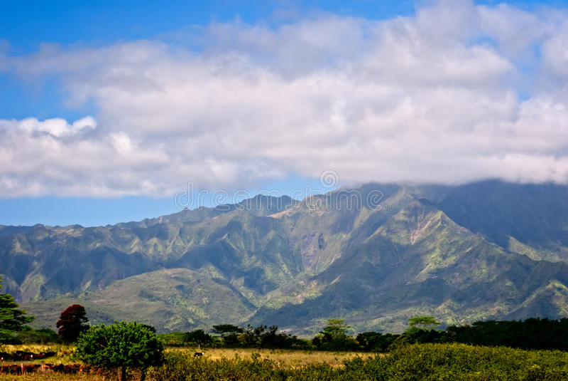 Vieh-Ranch auf Kauai, Hawaii stockfoto