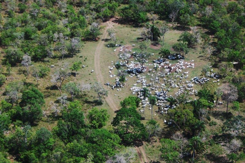 Vieh Ranching/Pantanal stockfotografie