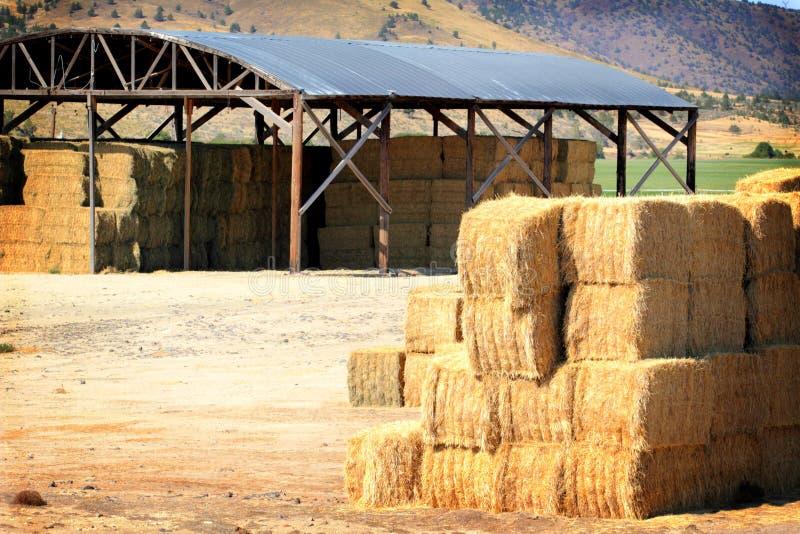 Vieh-Zufuhr-Gold stockbild