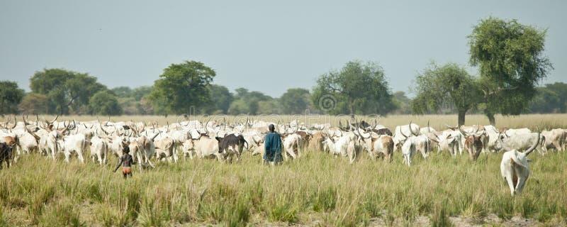 Viehhirten, Süd-Sudan stockfotografie